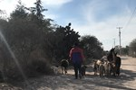 In Misión de Chichimecas, where most Chichimec speakers live, the sound of braying donkeys, bleating goats and crowing cockrels are all part of the atmosphere.